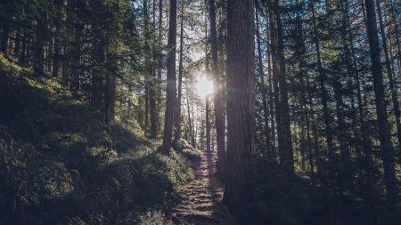Wald mit Lichtung zeigt den Klausel-Dschungel beim Thema Arbeitsvertrag