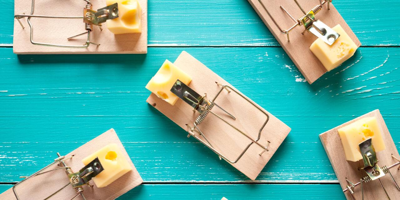 Mäusefallen mit Käse